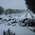 truffiers et syrah sous la neige